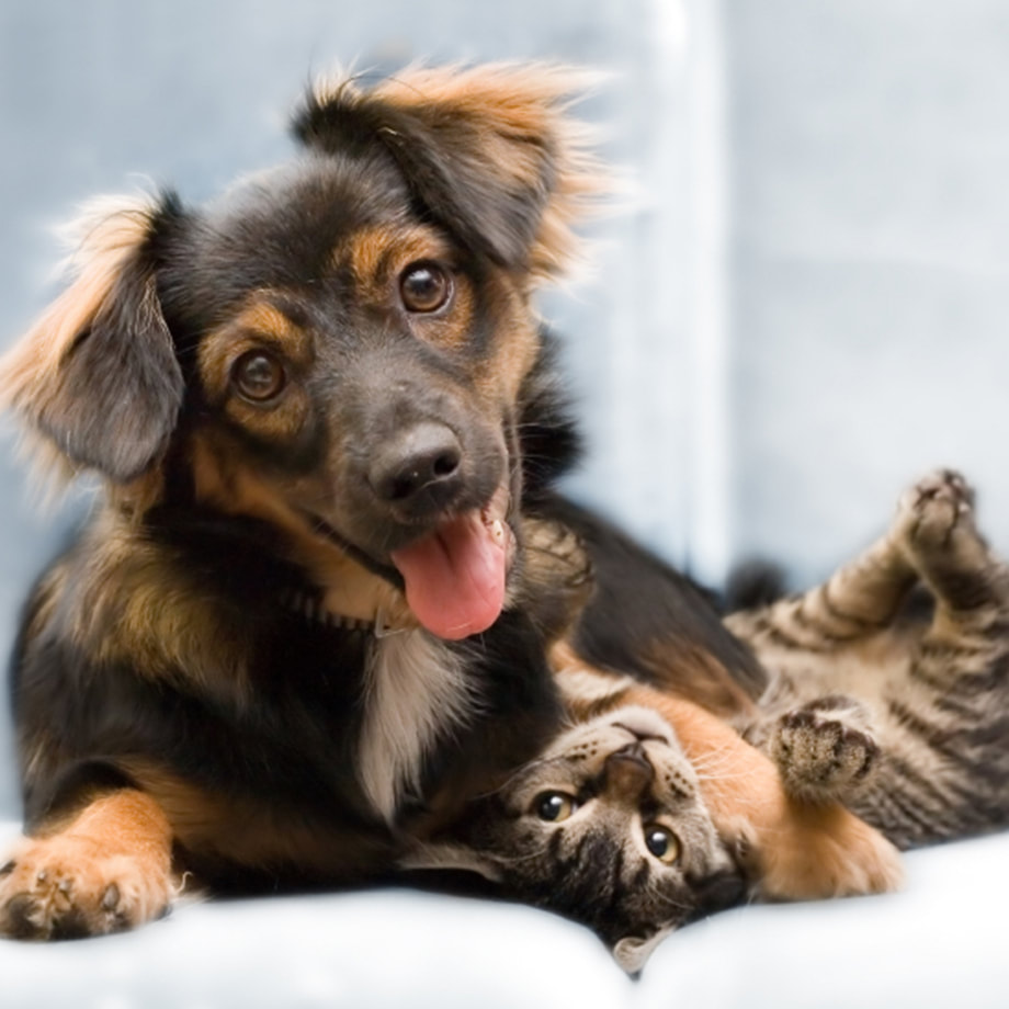 A dog and a cat laying together